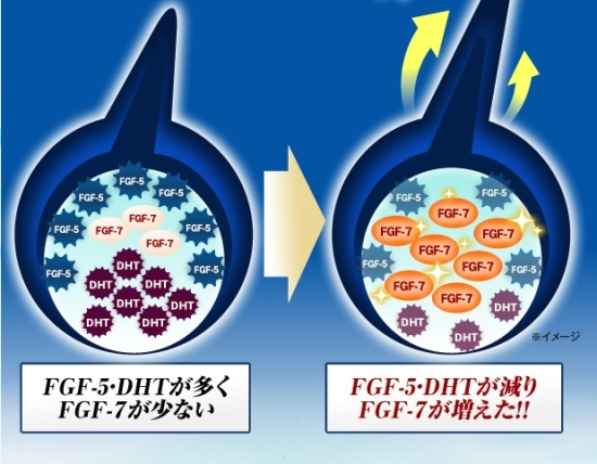 FGF-7.jpg